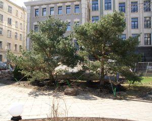 деревья, озеленение