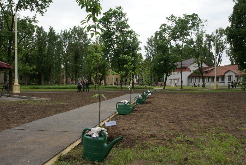 деревья, озеленение, благоустройство, кустарники