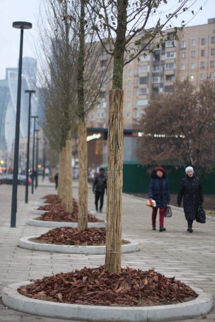 Деревья на Большой Дорогомиловской улице, озеленение
