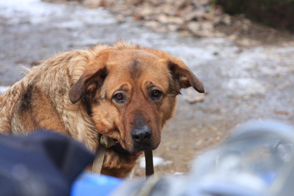 Сторожевая собака Муха, спасатели, праздник, крещение, лед
