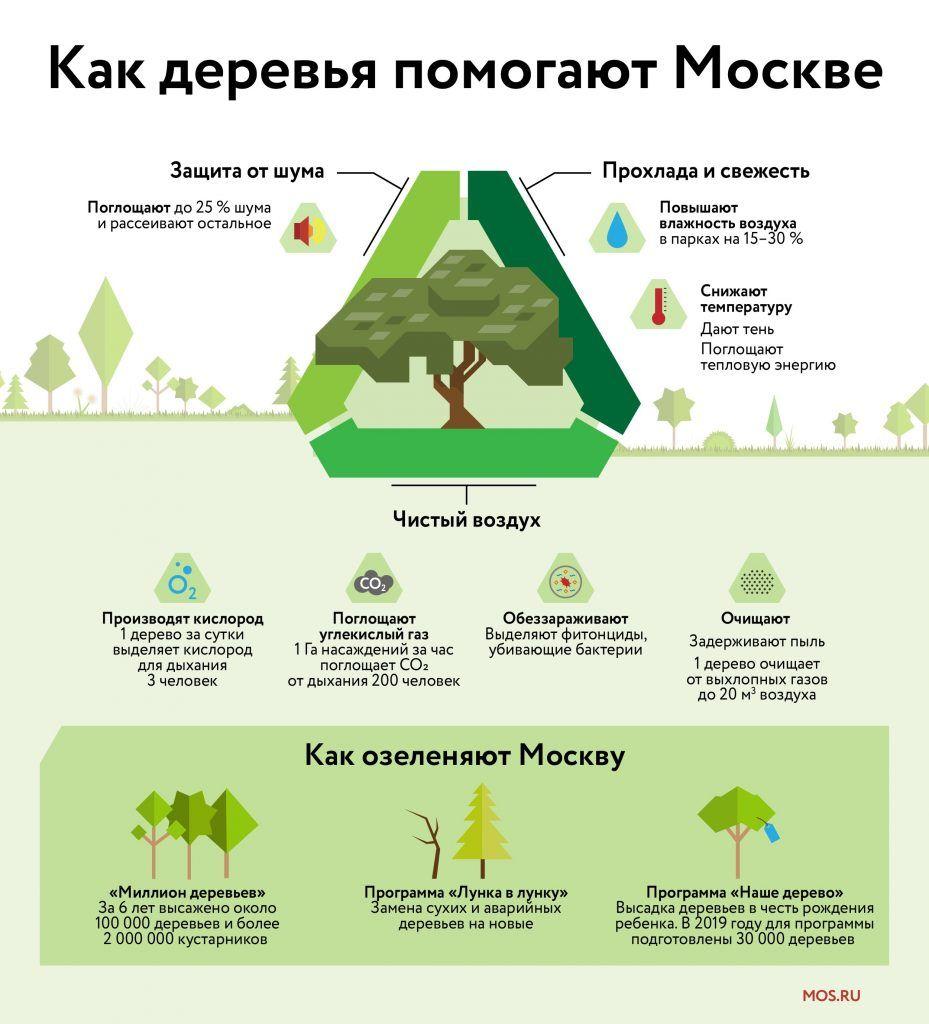 экология, озеленение