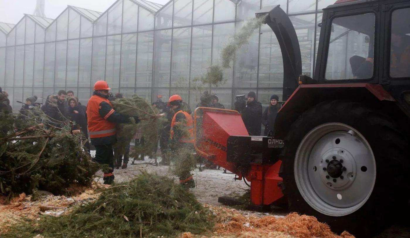 Утилизация елок специальной техникой, превращающей ствол и ветки новогодних деревьев в мульчу. В последствии она может быть использована в качестве удобрения для выращивания новых новогодних елочек.