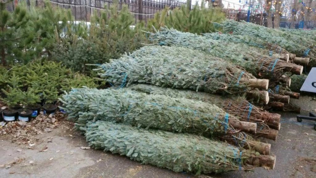 елки, утилизация, экология, Мосприрода
