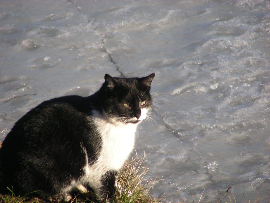 кошка, пруд, парк, Мосприрода