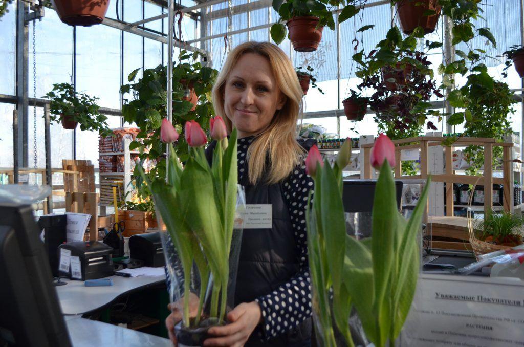 тюльпаны, цветы