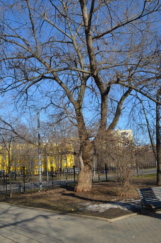 дерево, парк