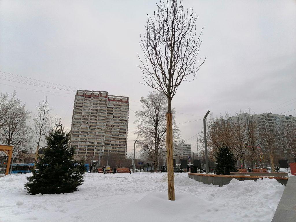 Берёзки, сквер, зима