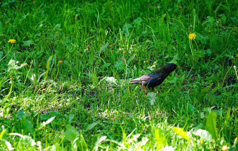 трава, птица
