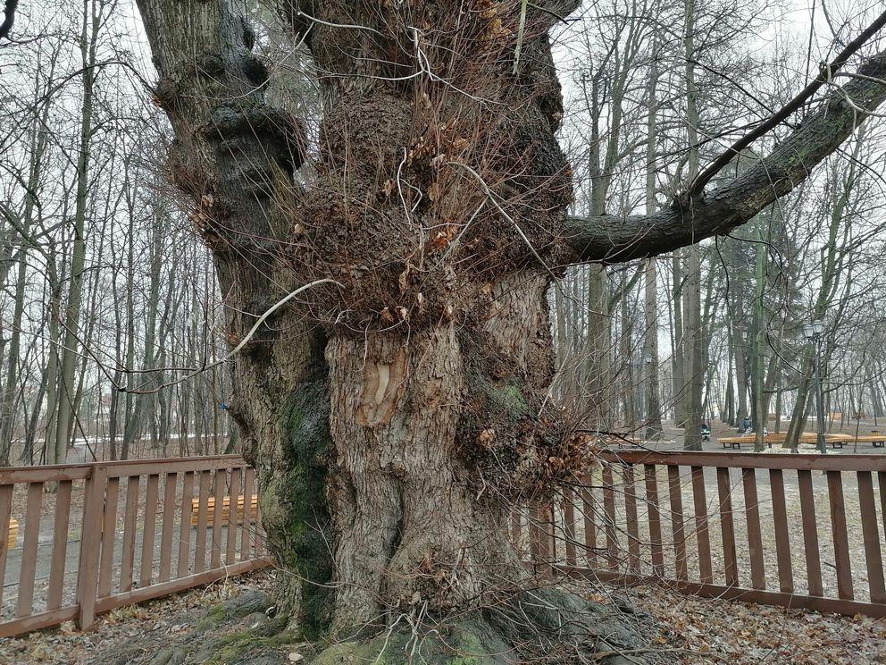 Усадьба Архангельское-Тюриково, Баварский лес