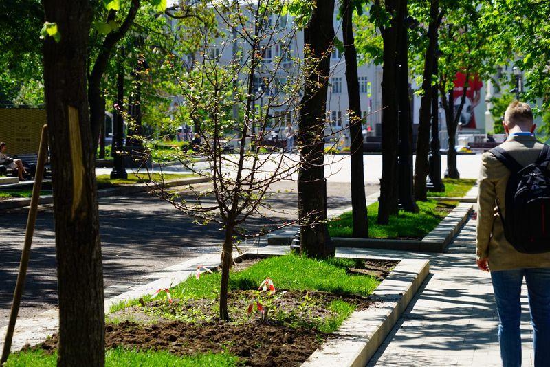 озеленение, деревья