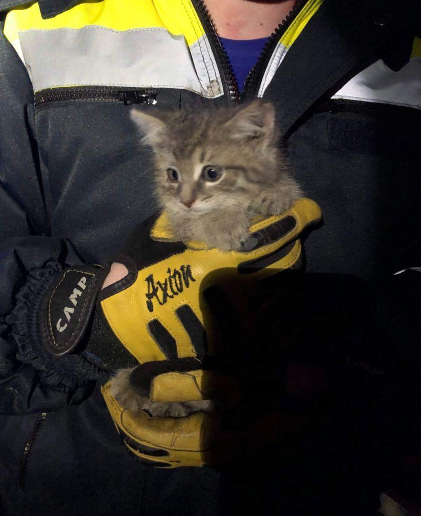 спасатели, котенок