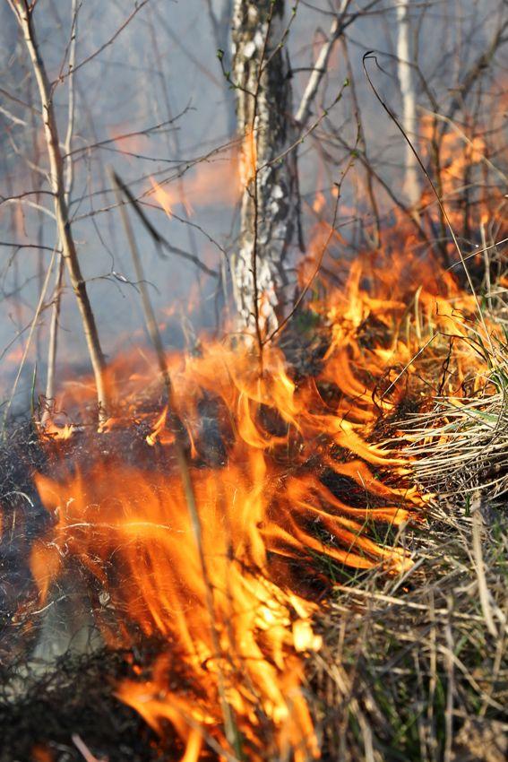 Пал травы становится причиной лесных пожаров