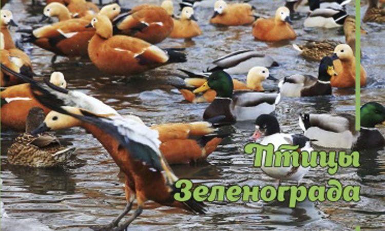 Птицы Зеленограда