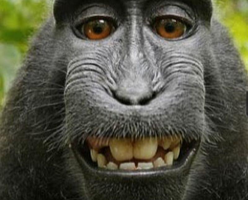 обезьяна, плохая шутка
