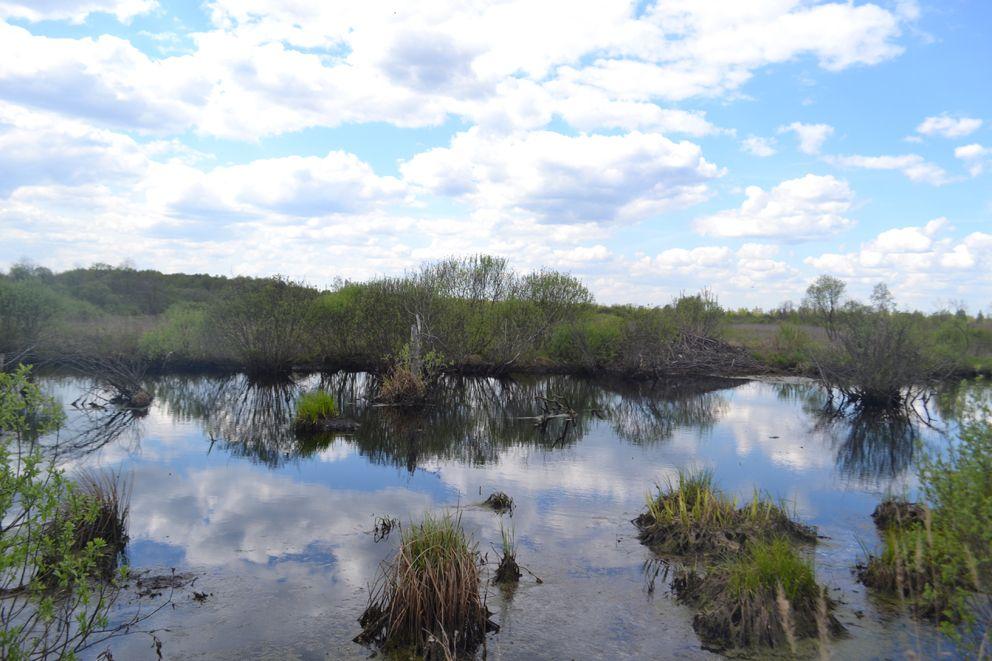 Обводненные участки бывших торфоразработак. Теперь в новых водоемах появилась рыба, гнездятся водоплавающие птицы, проживают около водные животные бобр, ондатра и норка.