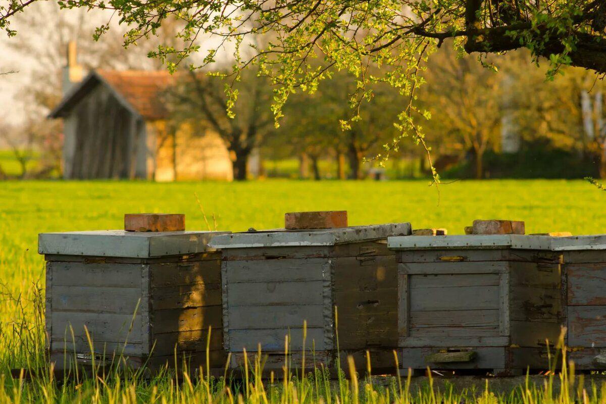 пчеловодство, ульи