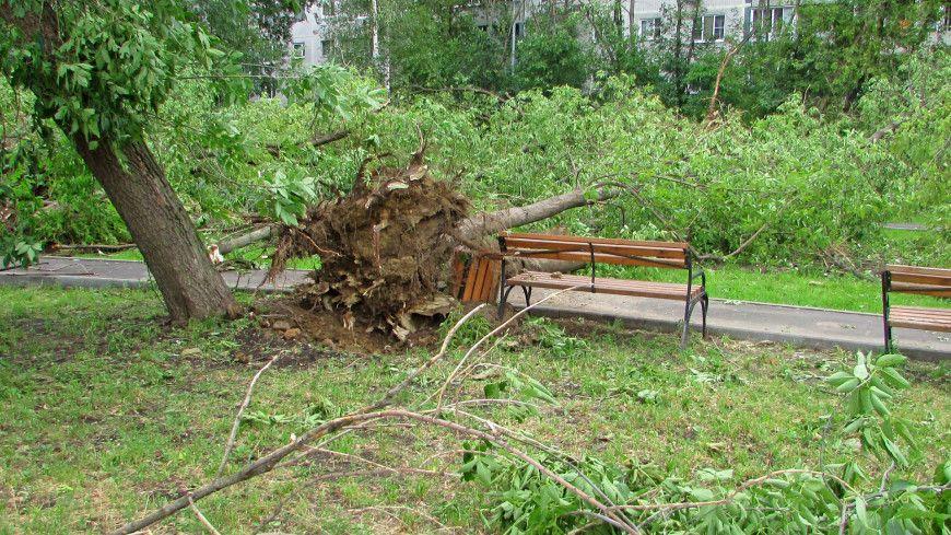 деревья, сильный ветер