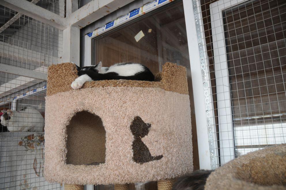 Главное достоинство кошки - умение уютно спать