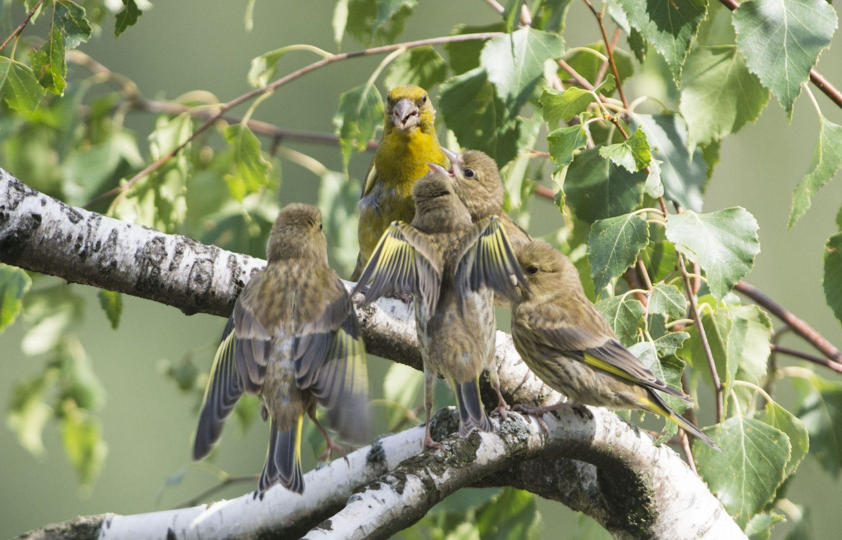 Птичий батл