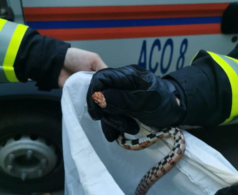 поймали змею