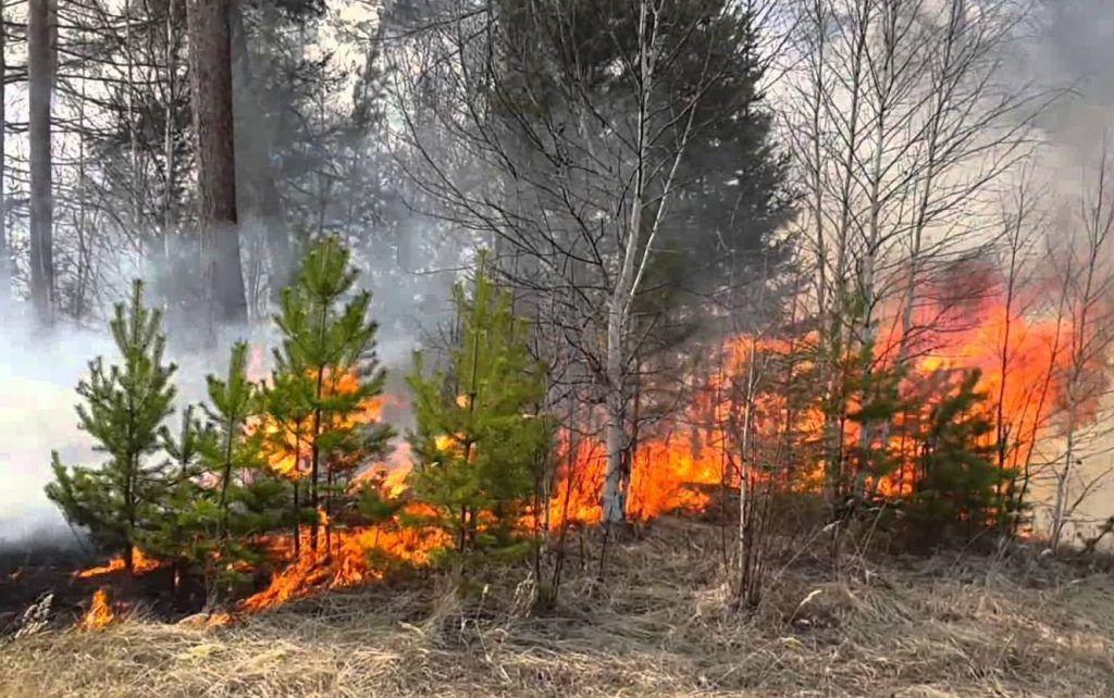 Лесной пожар в Шатурском районе 2010-15 годы