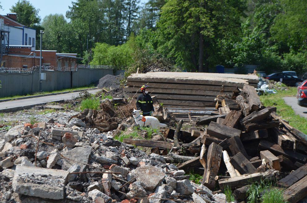 Учебный полигон «техногенный завал». Здесь натаскивают собак-спасателей для поиска людей в обрушившихся зданиях.