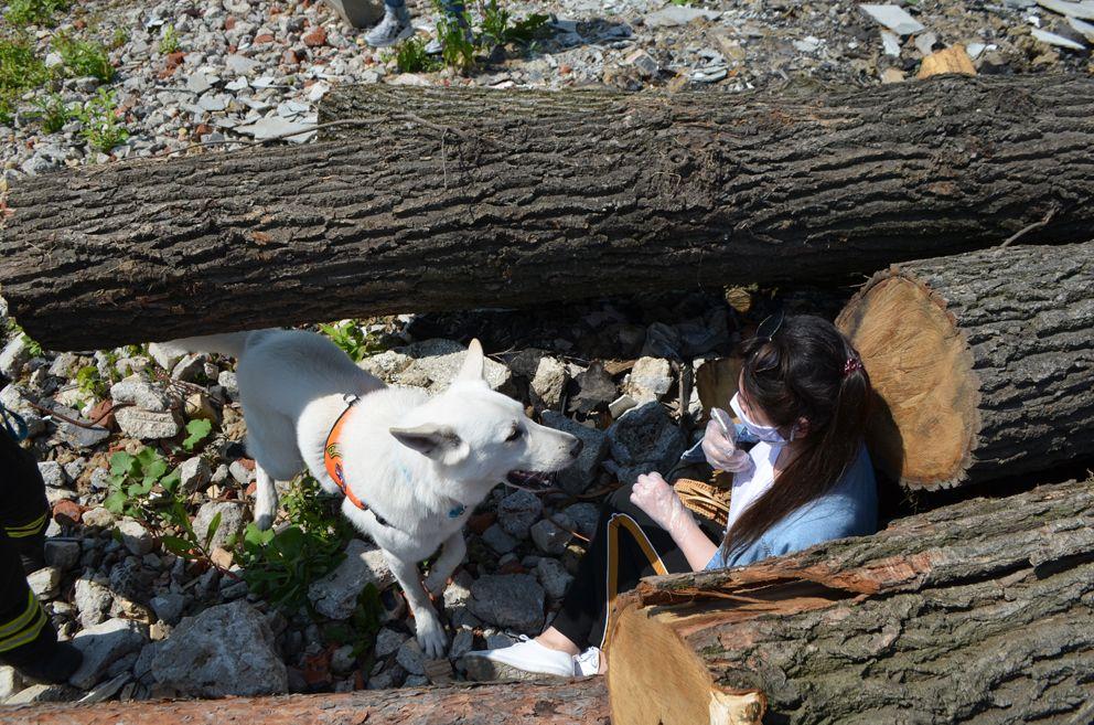 Собак-спасатель отыскала «потерпквшую» девушку статиста, за что получила несколько кусочков мяса в качестве похвалы.