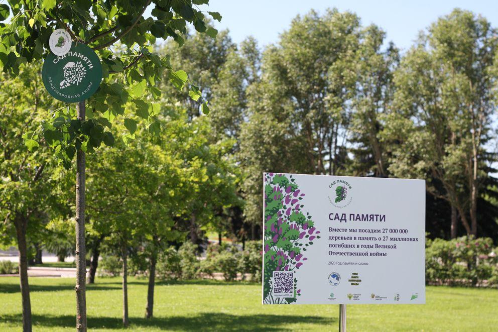сад памяти, озеленение