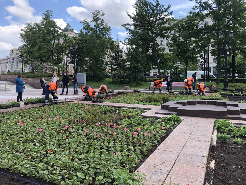 благоустройство Москвы, цветы