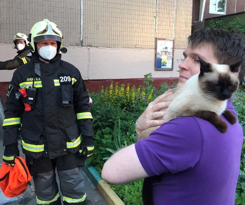 спасатели, кошки