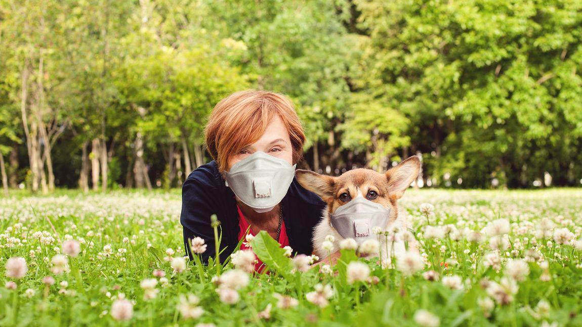 парк, собака, маска
