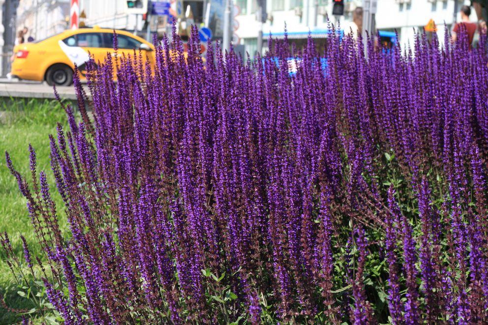 Цветы в Ильинском сквере