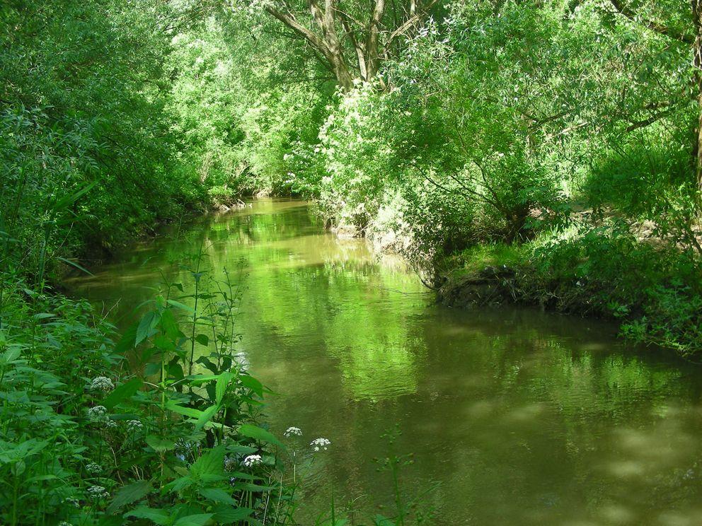 """Река Сетунь в среднем течении. 7 км протекает по природному заказнику """"Долина реки Сетунь"""""""
