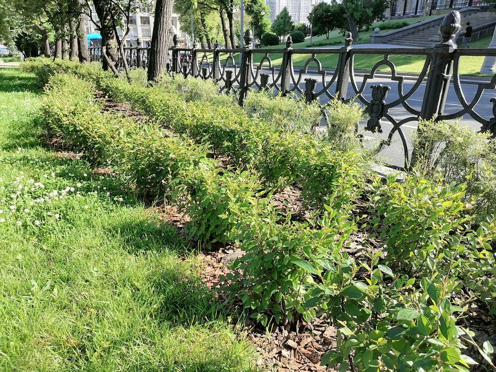 Ильинский сквер, парк, озеленение, место отдыха