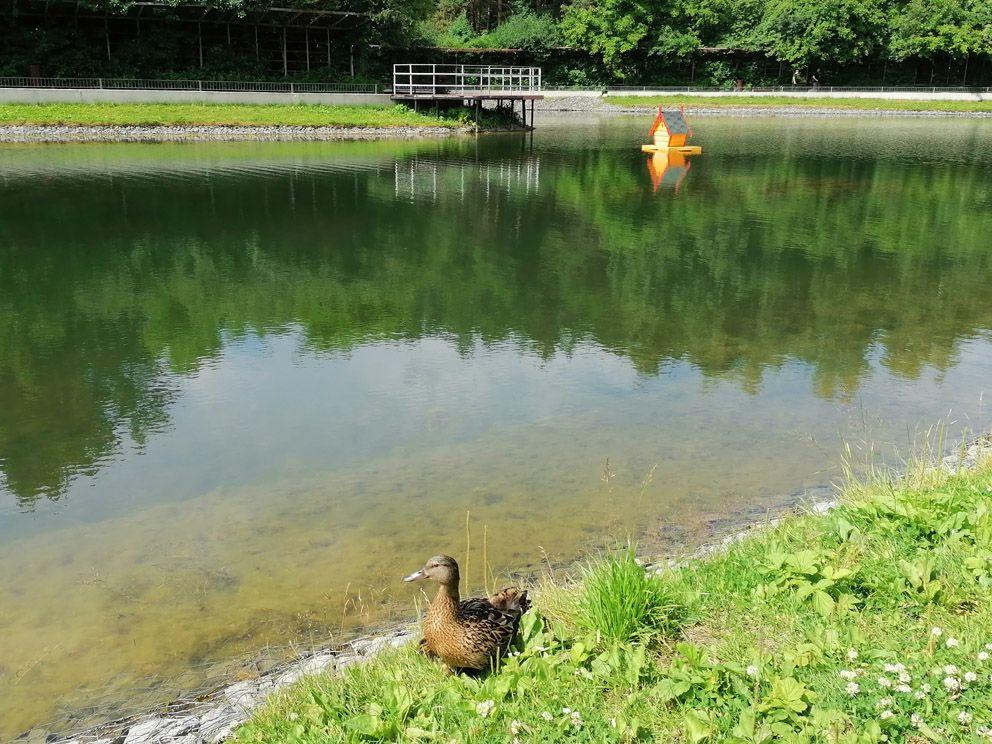 домик для уток, утки, пруд, ЮЗАО, ГУП Мосводосток