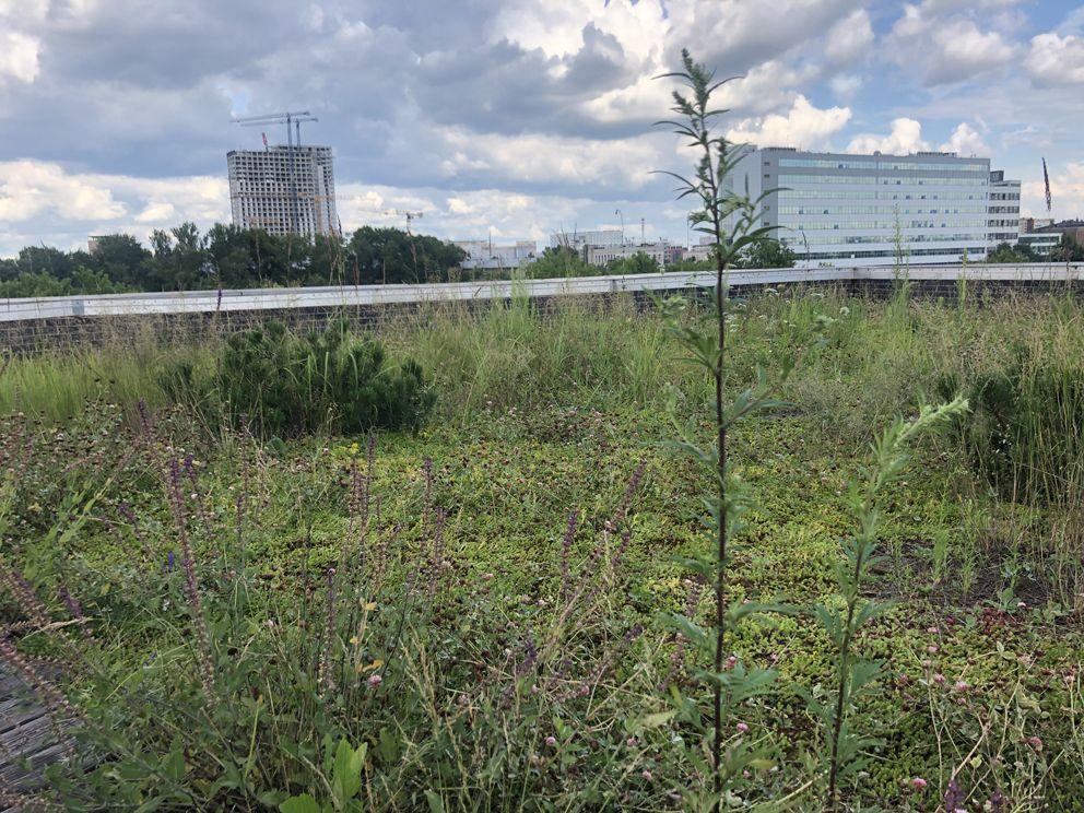 зеленые крыши, озеленение, благоустройство Москвы, украшение Москвы