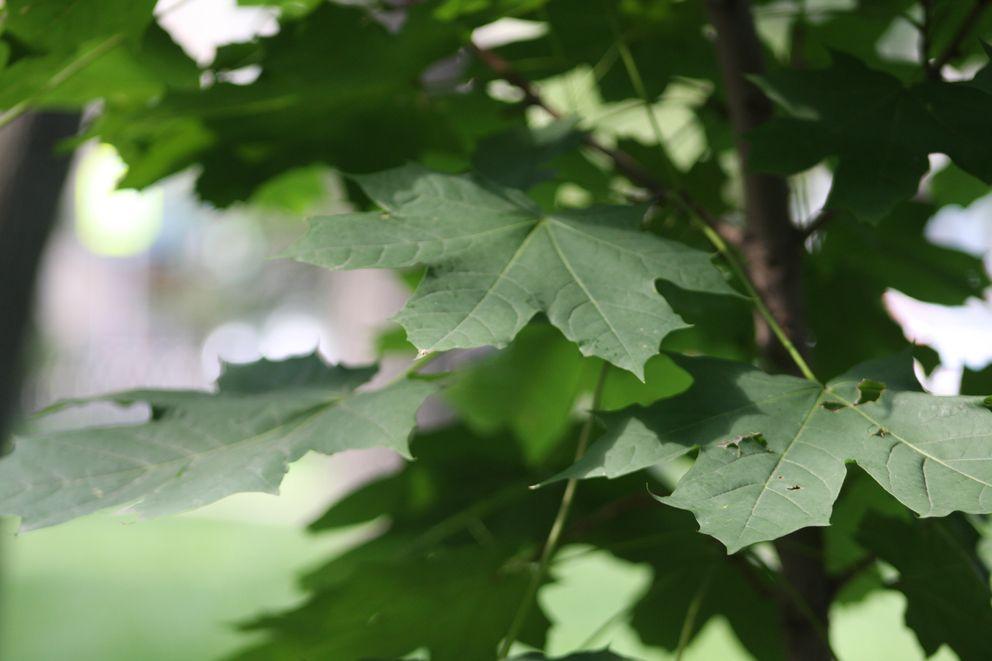 парк, деревья, тверской бульвар