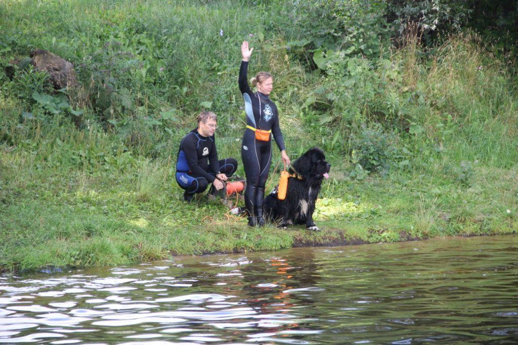 спасатели, собаки, пруд, водоем