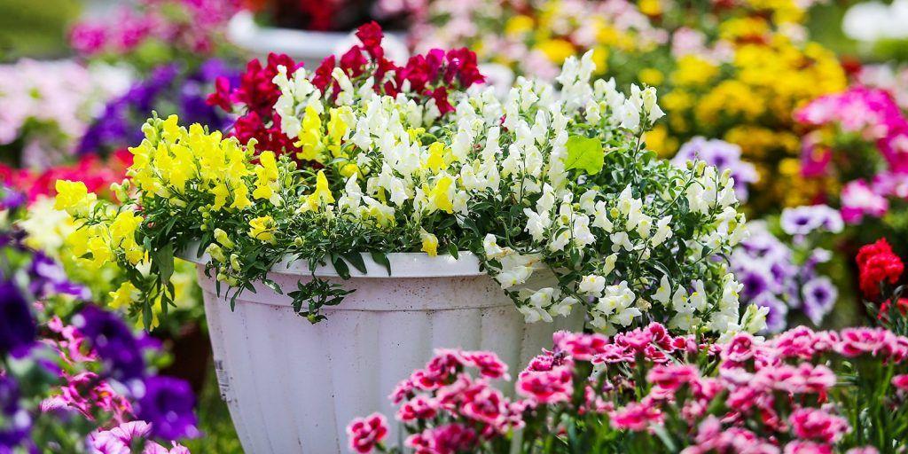 Цветы, Зеленая школа