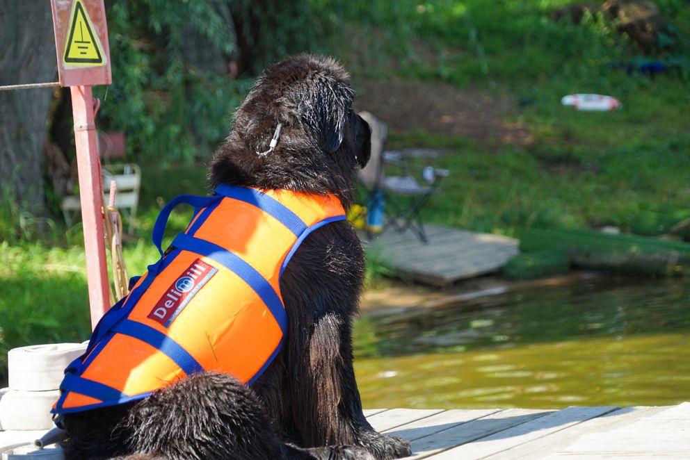 спасатели, Строгино, собаки, водоем, пруд