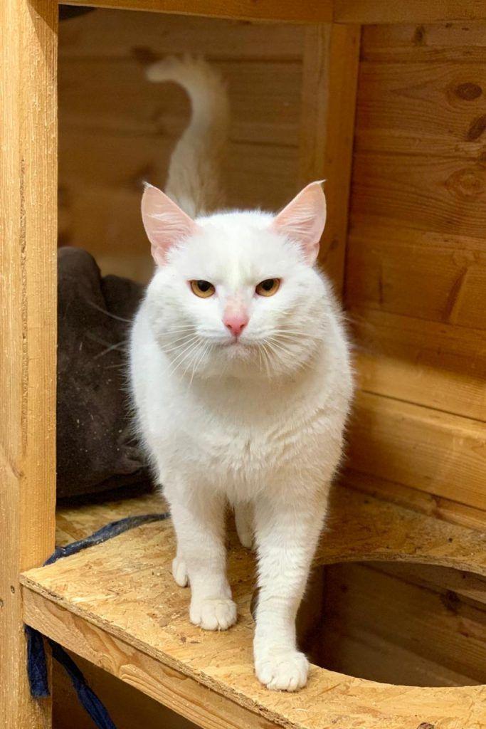 Альбус, кошка