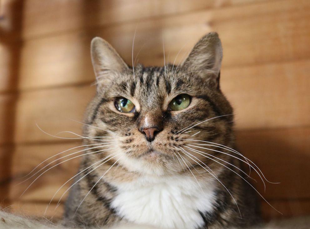 Фурия, кошка