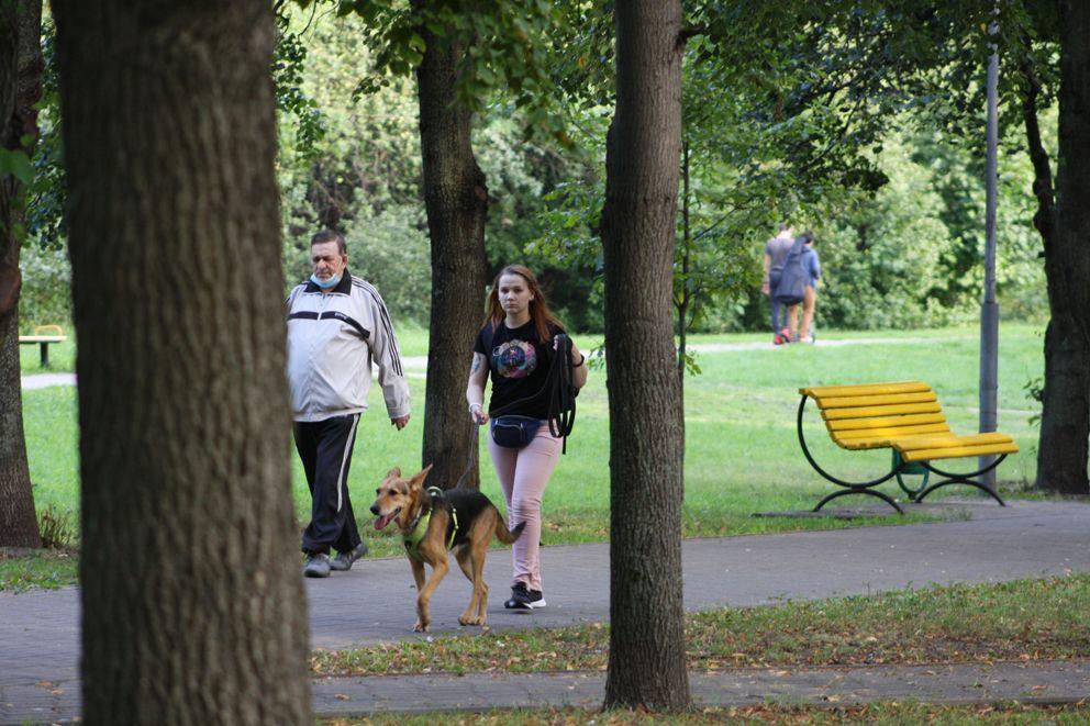 Хозяева собак выводят питомцев на прогулку