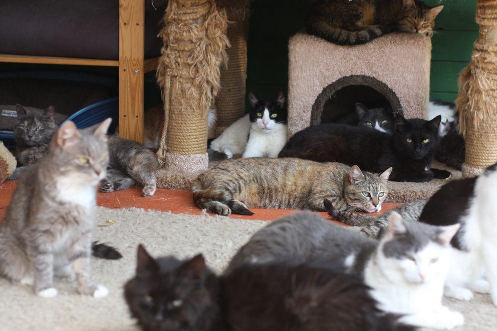 кошки, приют