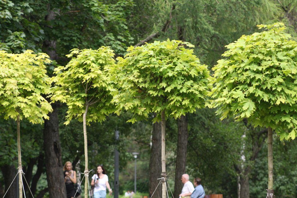 В парке высажено более 5000 штук деревьев и кустарников