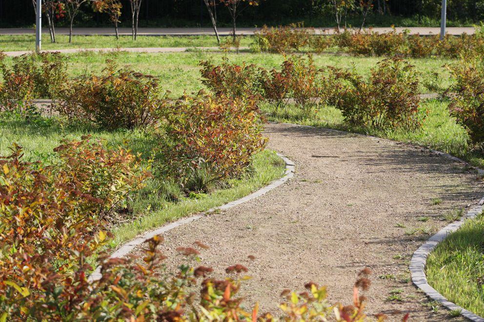 Аккуратные кустики вдоль извилистых тропинок сада
