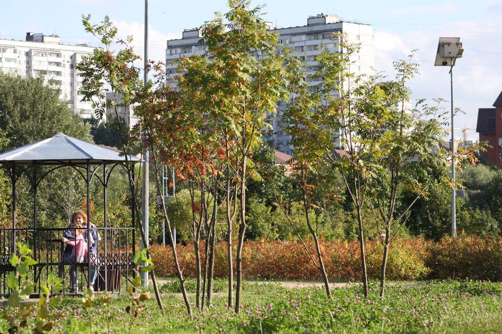 Беседка возле молодых рябиновых деревьев