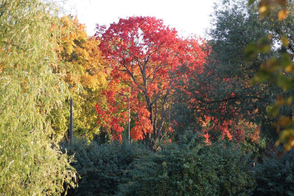парк Дружбы, осень, деревья
