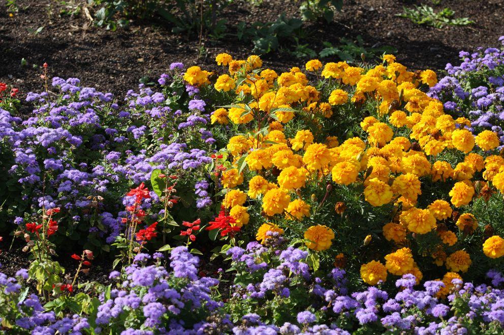 Красочное оформление цветников