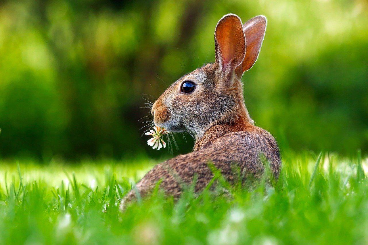заяц, мосприрода